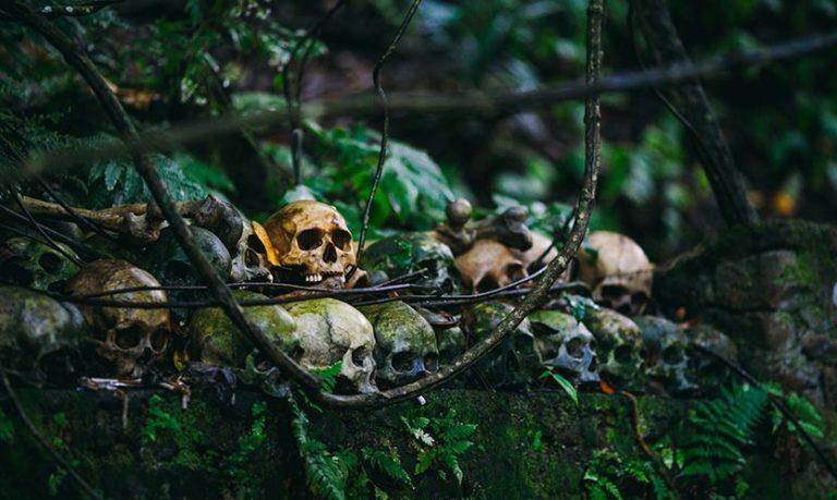 J'ai survécu dans la jungle… des câbles (article sans machette mais avec un peu de sabre)